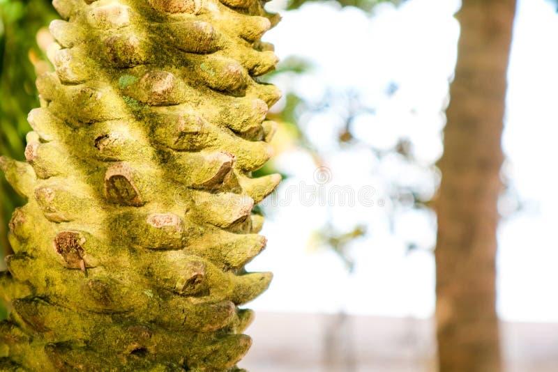 O corpo da palmeira era ramo e musgo cortados no corpo fotografia de stock
