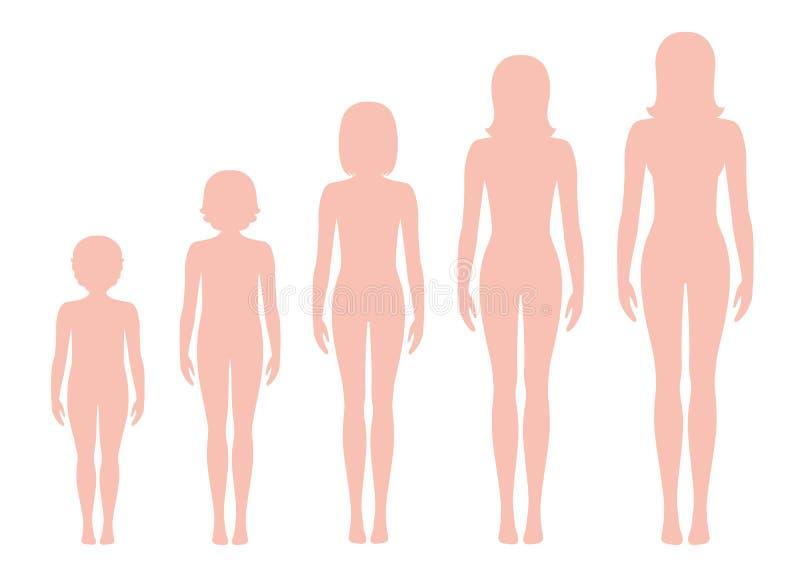 O corpo do ` s das mulheres proporciona a mudança com idade ilustração do vetor