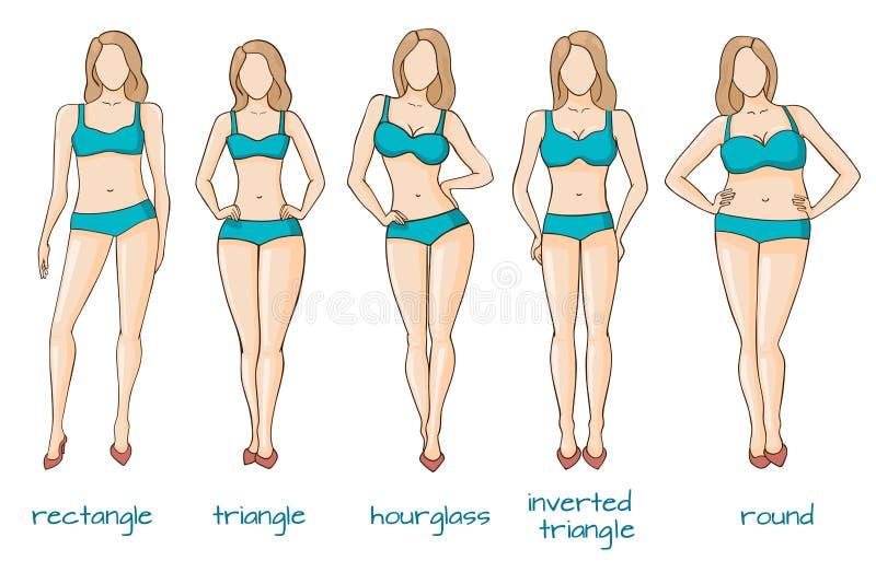 O corpo fêmea figura, formas da mulher, cinco tipos ilustração do vetor