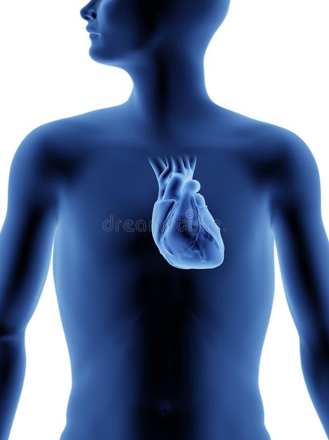 O corpo humano - coração ilustração stock