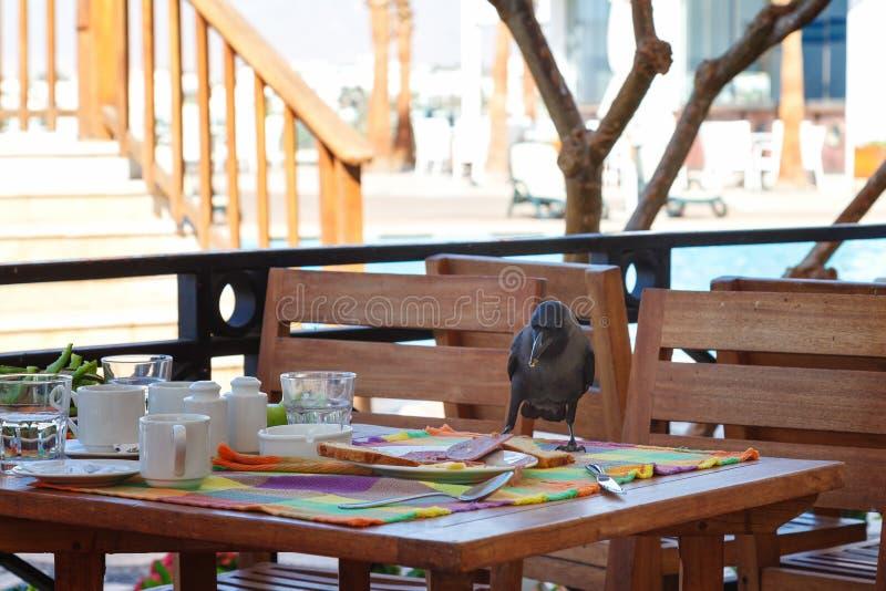 O corvo preto rouba o alimento da tabela em um café imagem de stock royalty free