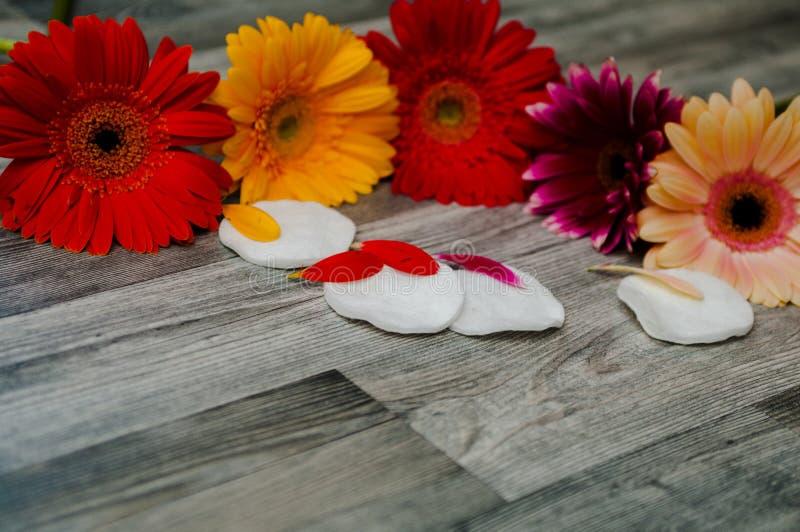 O cosmético desnata, flores ervais da esponja da bucha no fundo de pano foto de stock royalty free