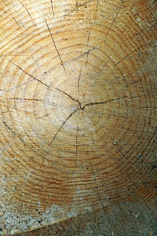 O coto do pinho Um corte através do fim do tronco de árvore acima O ano soa visível fotos de stock royalty free
