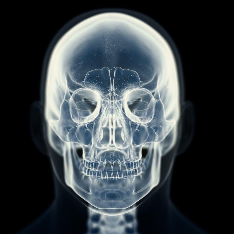 O crânio ilustração stock