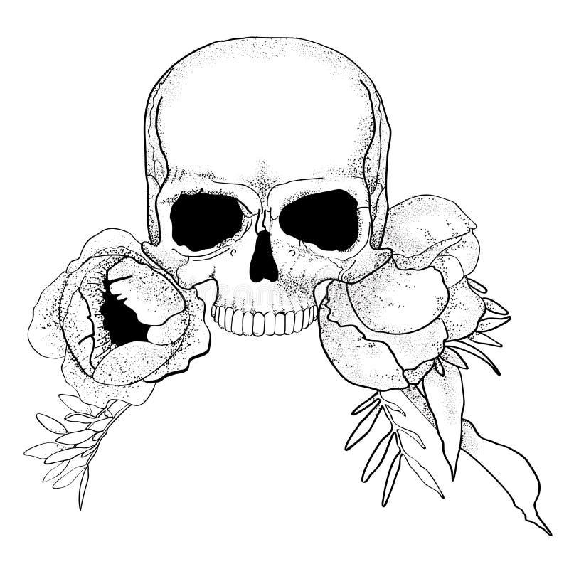 O crânio com peônia floresce o vetor do gráfico do boho ilustração stock