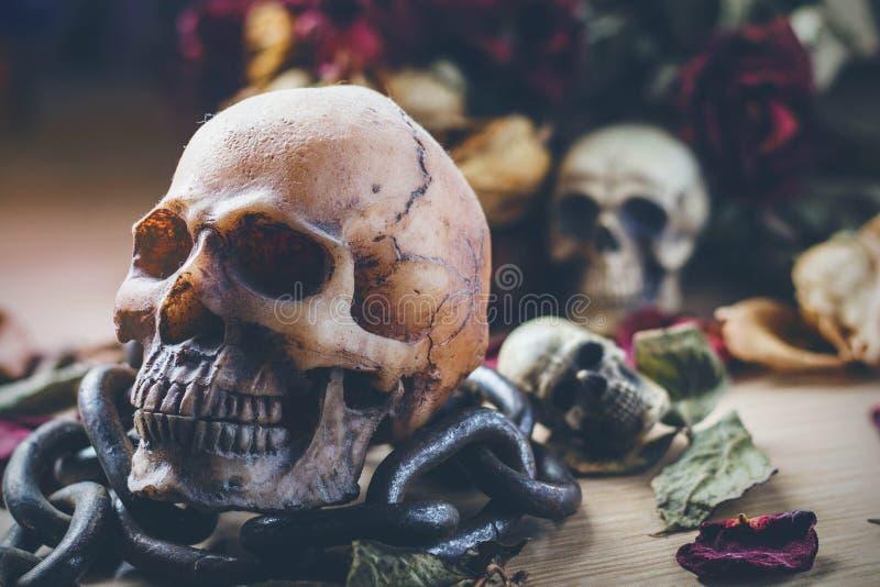 O crânio e a corrente em de madeira fotos de stock royalty free