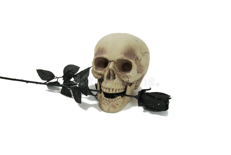 O crânio e o preto levantaram-se foto de stock