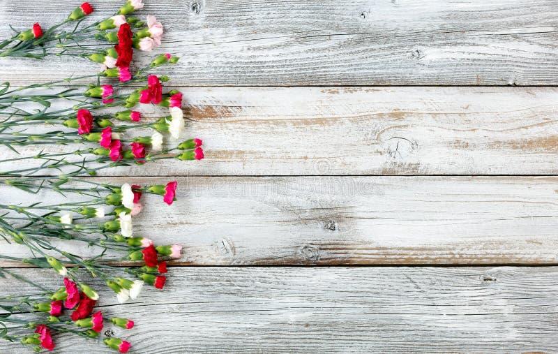 O cravo colorido floresce formando a beira esquerda no weathere branco fotos de stock
