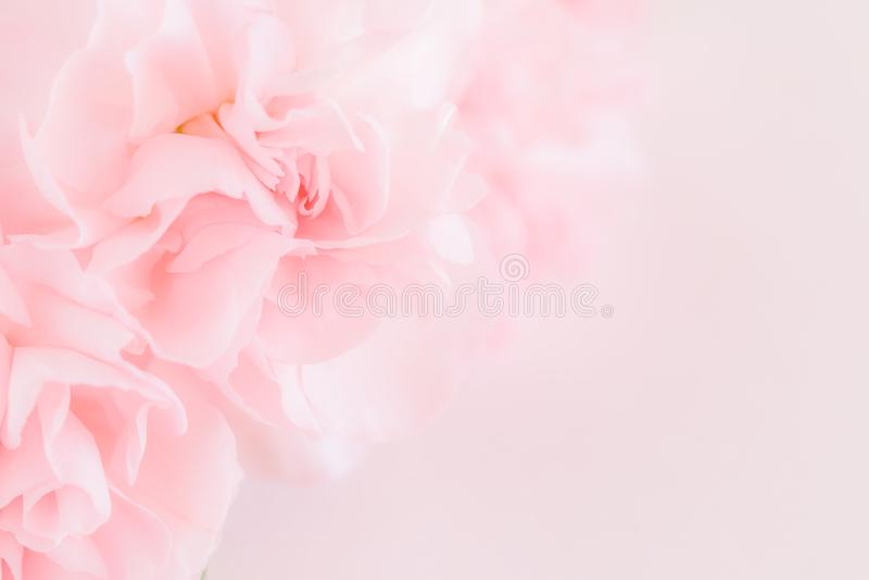 O cravo cor-de-rosa floresce o ramalhete Filtro macio imagem de stock royalty free