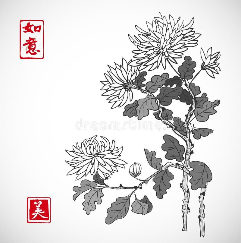 O crisântemo floresce no estilo oriental no fundo branco Contém o hieróglifo - a beleza, sonhos vem verdadeiro ilustração royalty free