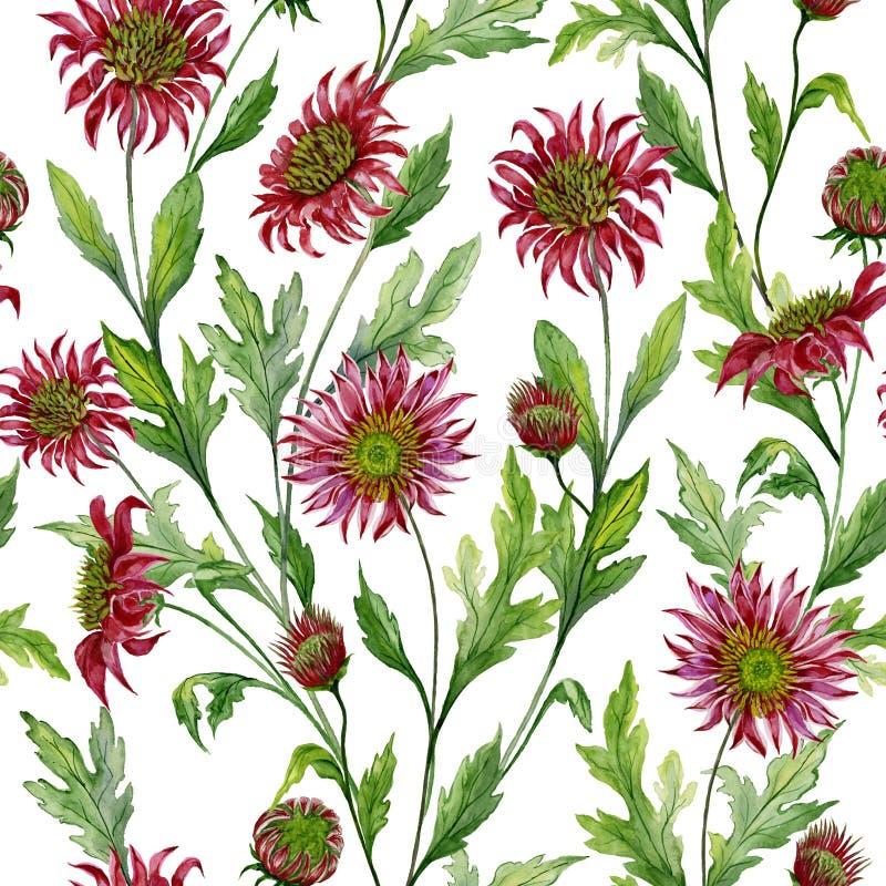 O crisântemo vermelho bonito floresce com as folhas verdes no fundo branco Teste padrão botânico sem emenda Pintura da aguarela ilustração royalty free