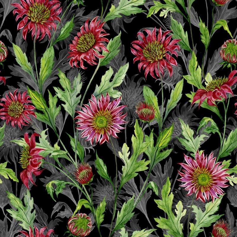 O crisântemo vermelho bonito floresce com esboços cinzentos no fundo preto Teste padrão botânico sem emenda ilustração royalty free