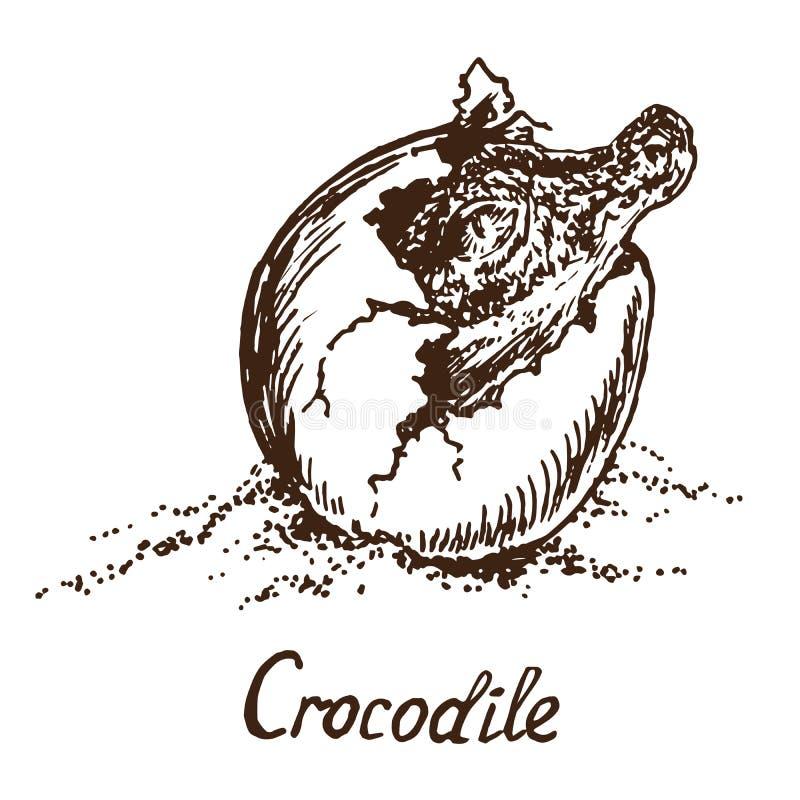 O crocodilo verdadeiro do crocodilo chocou de um ovo ilustração do vetor