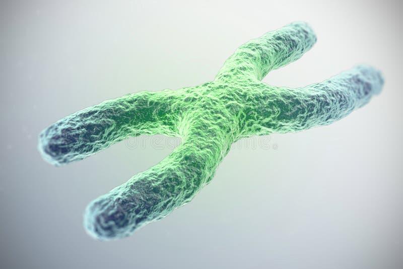 O cromossoma x, esverdeia no centro, o conceito da infecção, mutação, doença, com efeito de foco ilustração 3D foto de stock