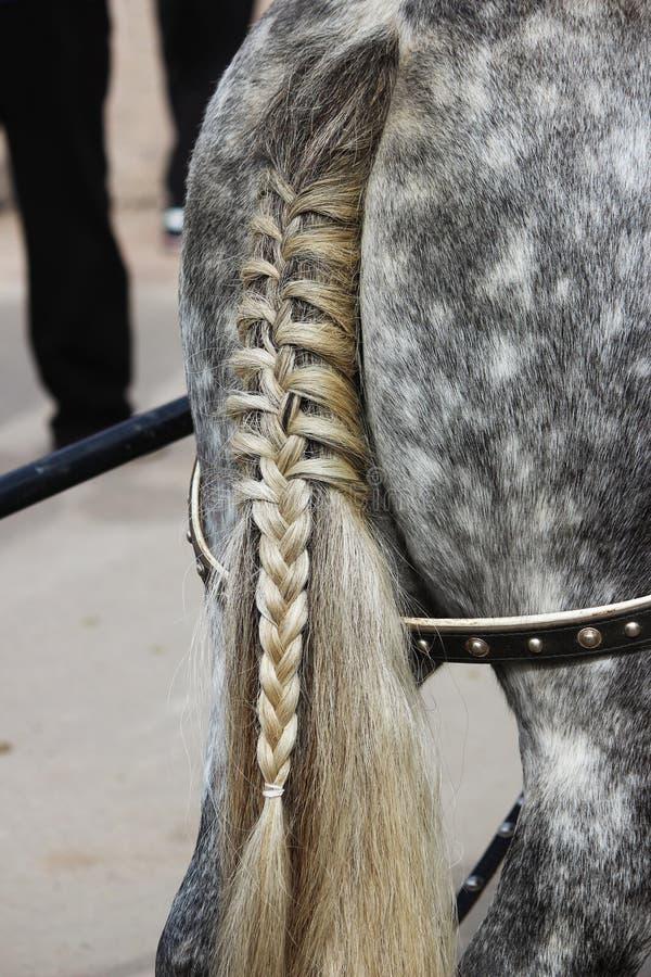 O crupe do caballus do Equus dos cavalos, com cauda, entrançou tranças em um desempenho na região de Gatchina Leninegrado do dia  foto de stock