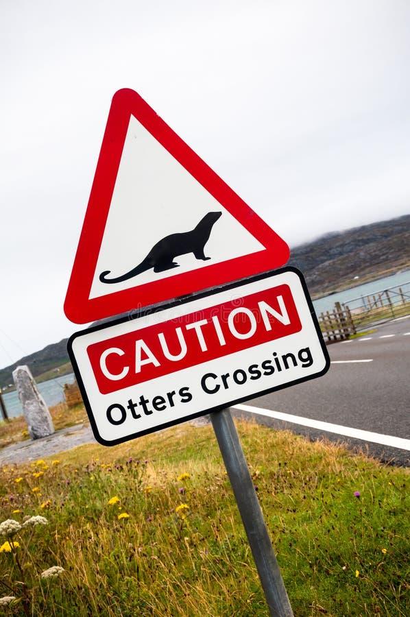 O cruzamento da lontra assina dentro Escócia foto de stock