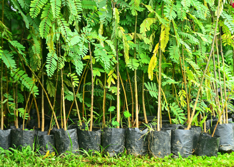 O cultivo da casa na árvore em pasta fotografia de stock royalty free