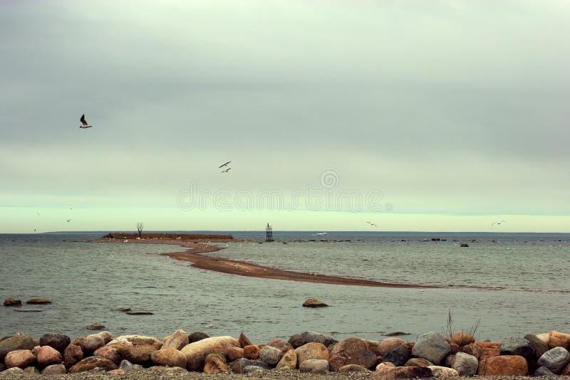 O cuspe vai à ilha com as gaivota dos pássaros com ninhos e os ovos no Golfo da Finlândia com uma fileira das pedras no primeiro  imagens de stock royalty free