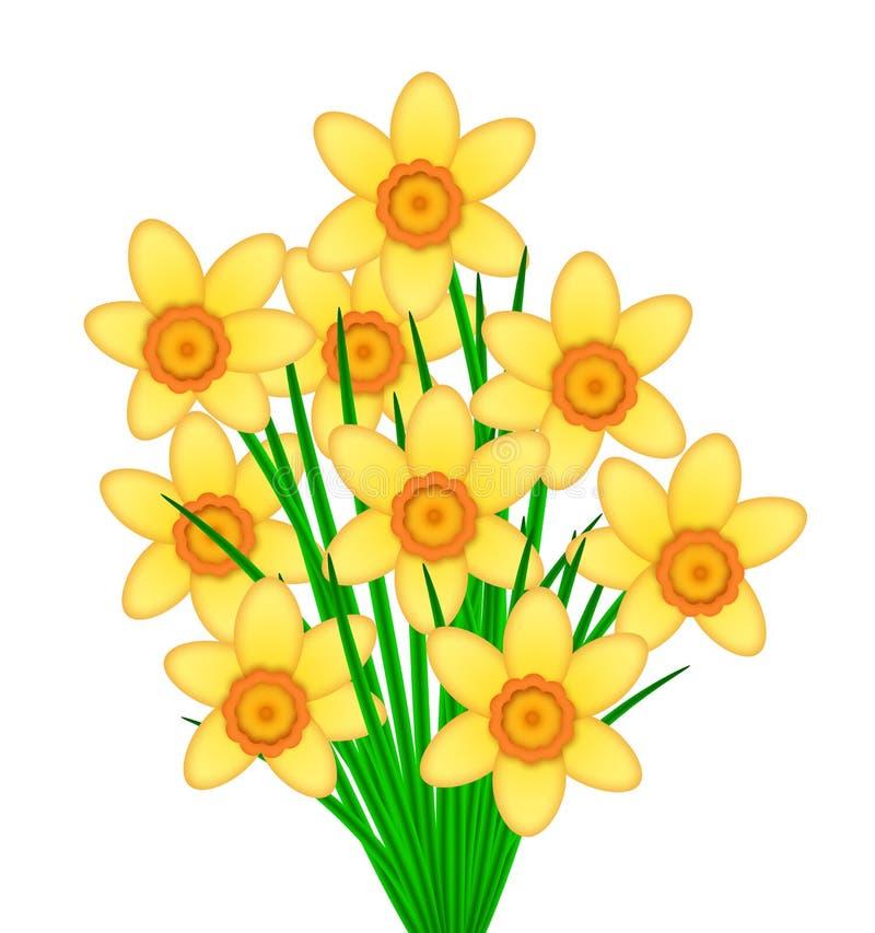 O Daffodil amarelo floresce o grupo ilustração stock
