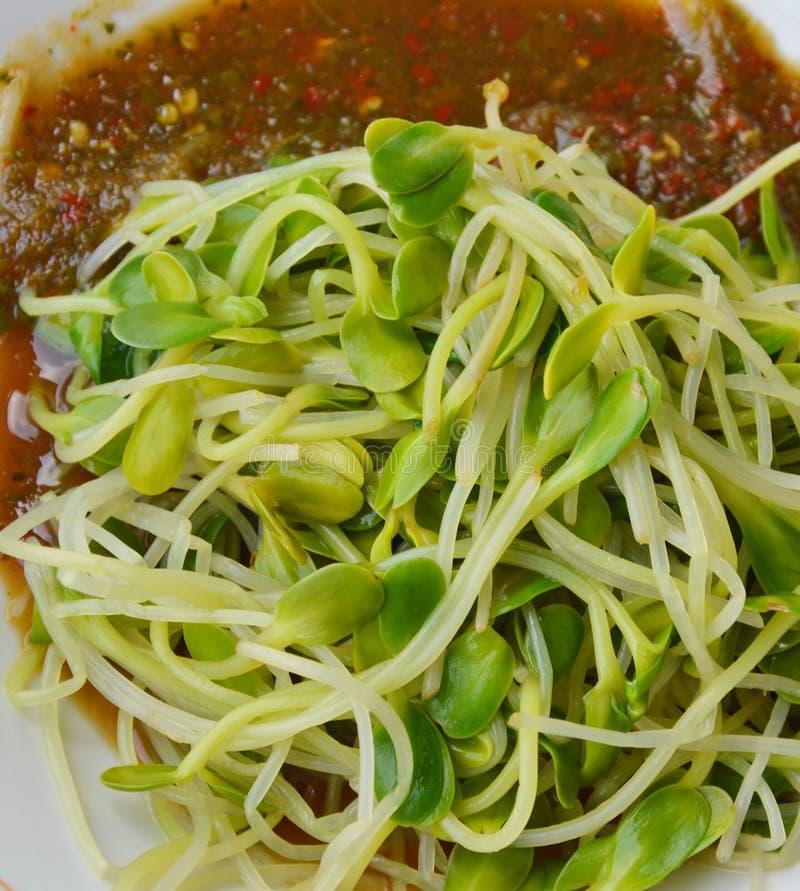 O delicado ferveu os brotos do girassol que vestem o molho picante tailandês no prato fotos de stock