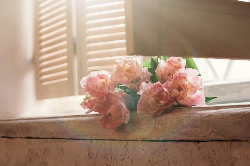 O delicado focalizou flores cor-de-rosa no peitoril da janela fotos de stock