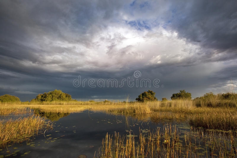 O delta de Okavango - Botswana imagens de stock