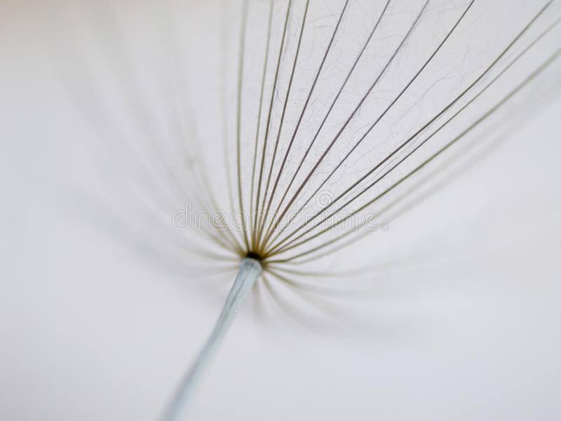 Download O Dente-de-leão Semeia (39) Papo (do Taraxacum) Imagem de Stock - Imagem de naughty, flora: 29849673