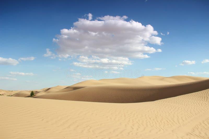 O deserto foto de stock