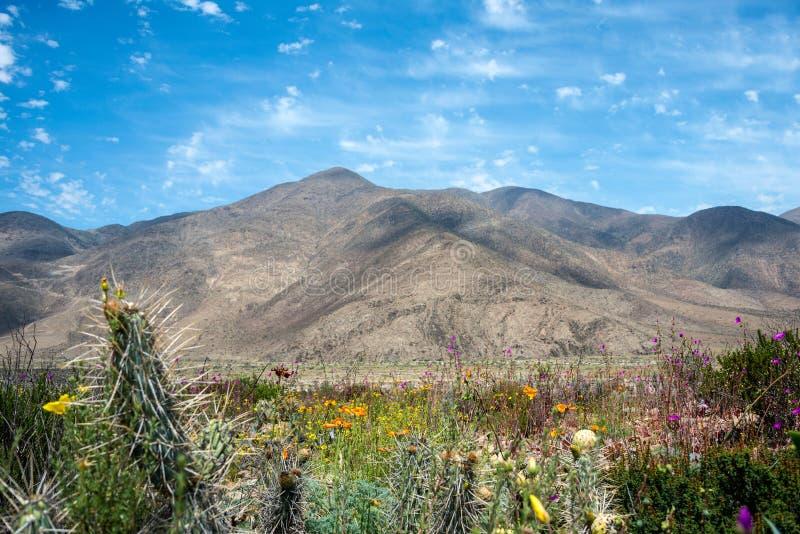 O deserto de florescência no Atacama chileno Desertama abandona fotografia de stock royalty free