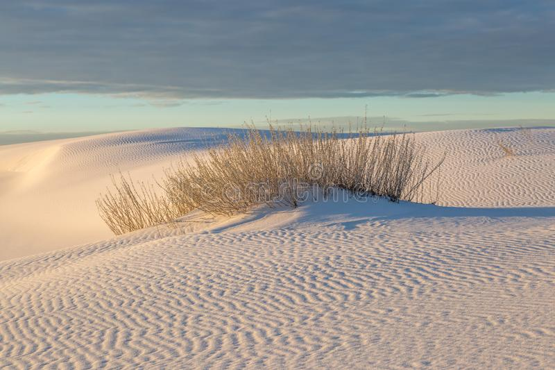 O deserto Palnts nas areias brancas abandona imagens de stock