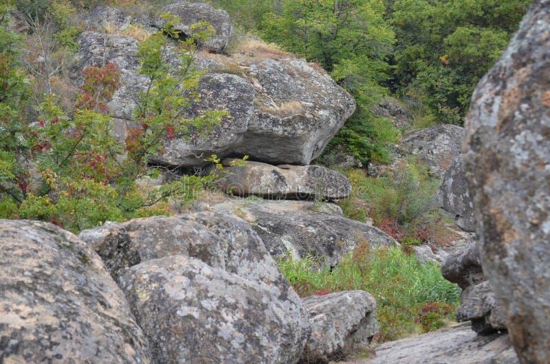 O desfiladeiro da garganta coberto de vegetação com os arbustos e as árvores Aktovo ucr?nia fotos de stock royalty free