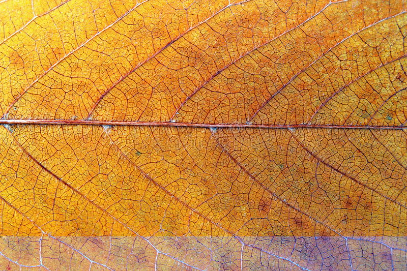 Download Textura da folha da cereja imagem de stock. Imagem de linhas - 29848109