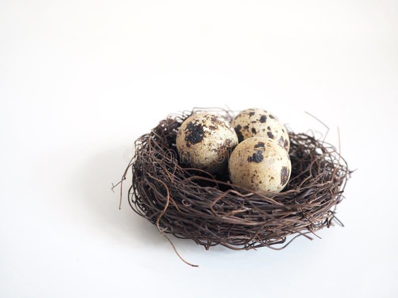 O detalhe dos pássaros aninha-se com os ovos de codorniz manchados marrom no fundo defocused branco Conceito da Páscoa e da mola fotografia de stock