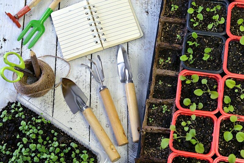 O diário, as ferramentas e o petúnia abertos do jardim florescem brotos no potenciômetro, vista superior fotos de stock