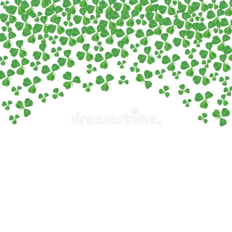 O dia do St Patricks curvou a beira superior dos trevos sobre o branco ilustração stock