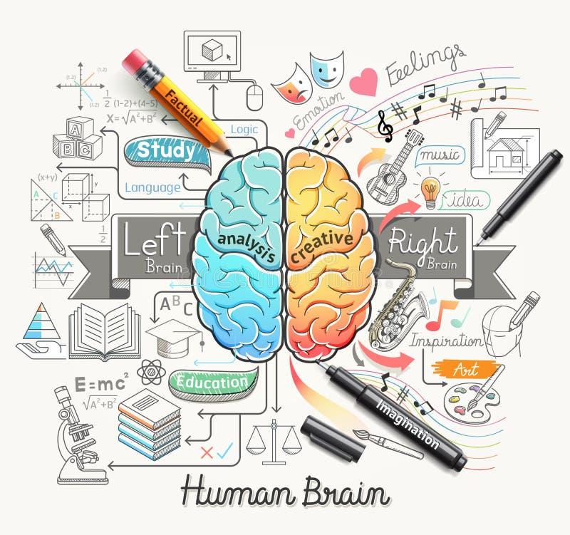 O diagrama do cérebro humano rabisca o estilo dos ícones ilustração stock