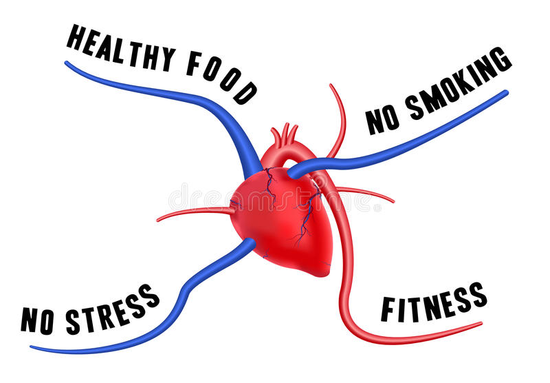 Um coração saudável ilustração stock