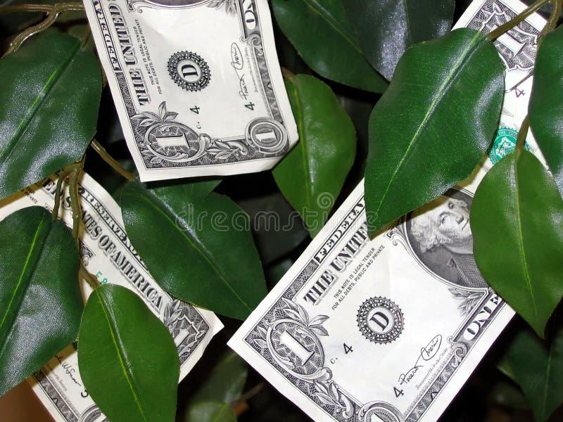 O dinheiro cresce em árvores! fotos de stock