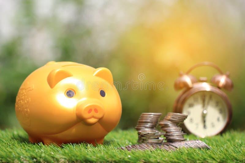 O dinheiro da economia para prepara-se no futuro e o conceito do investimento, leit?o dourado e pilha de dinheiro das moedas no f foto de stock royalty free