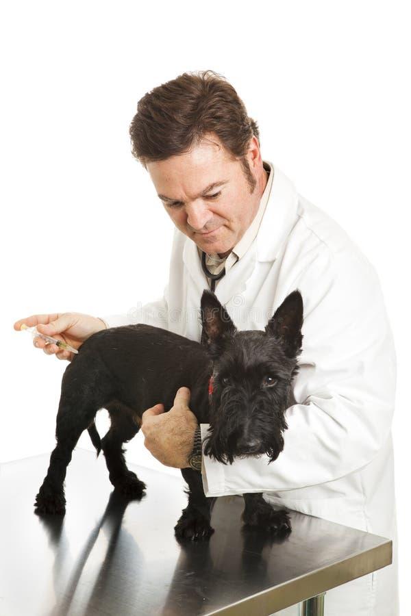 O Doggy deficiente começ um tiro imagem de stock royalty free