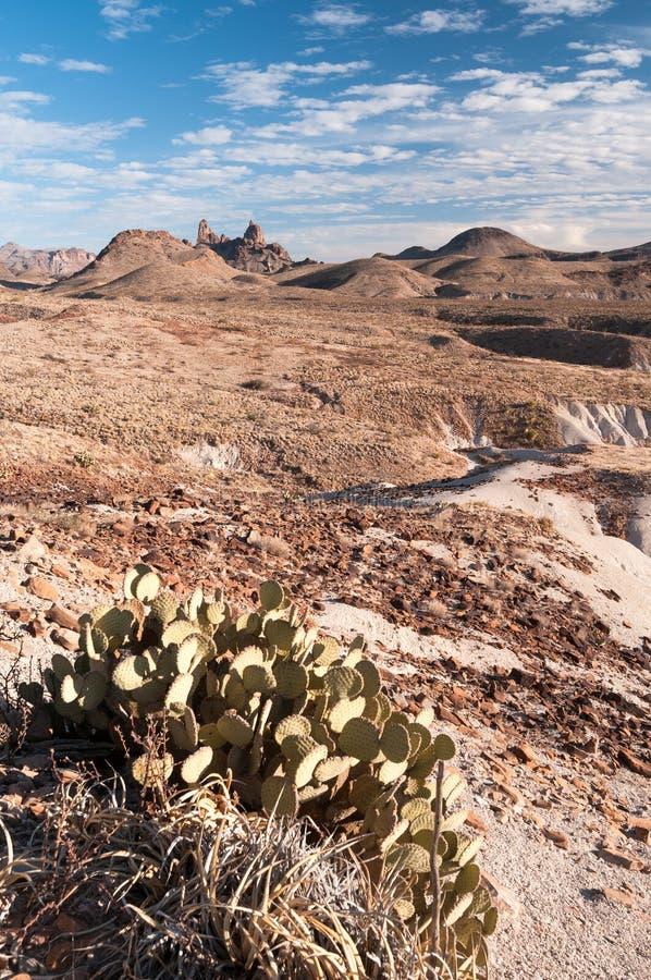 O?dos de la mula, parque nacional Tejas de la curva grande foto de archivo
