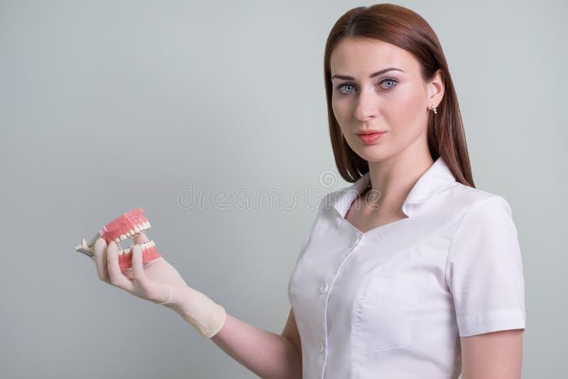 O doutor da mulher demonstra a higiene oral na disposição, odontologia Espaço para o texto imagem de stock