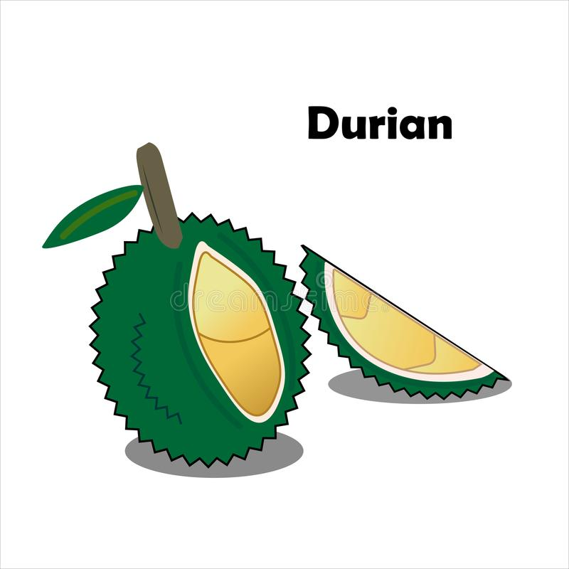 O Durian é um fruto que seja sabido como o rei dos frutos e tenha a fotos de stock