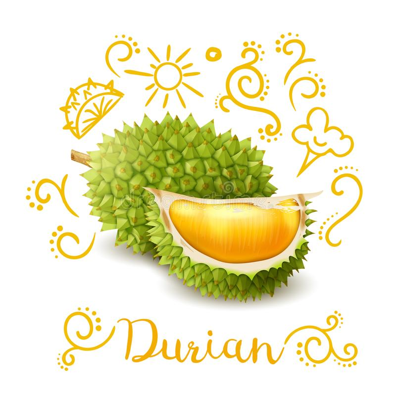 O Durian exótico do fruto rabisca a composição ilustração royalty free