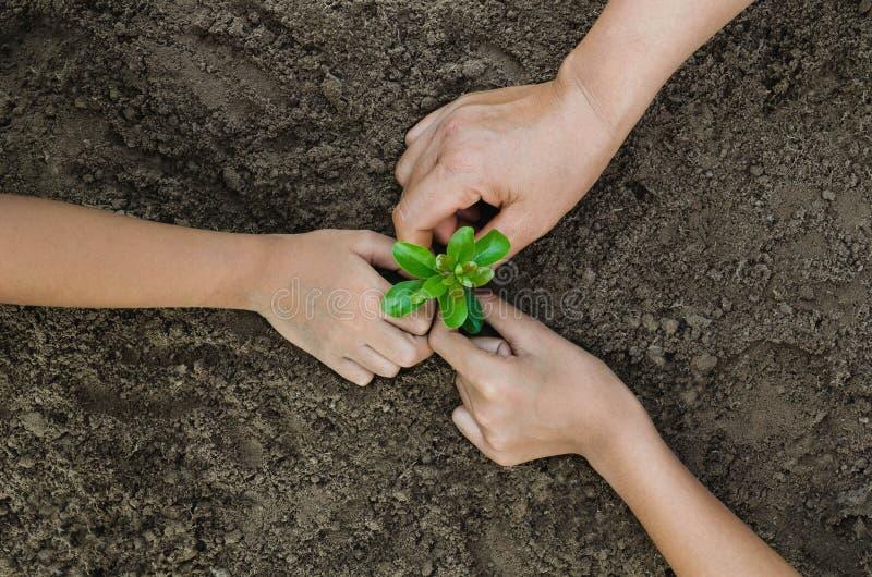 O eco crescente do conceito agrupa três crianças da mão que plantam junto imagem de stock royalty free