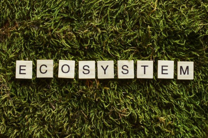 O ecossistema escrito com letras de madeira cubou a forma na grama verde fotos de stock