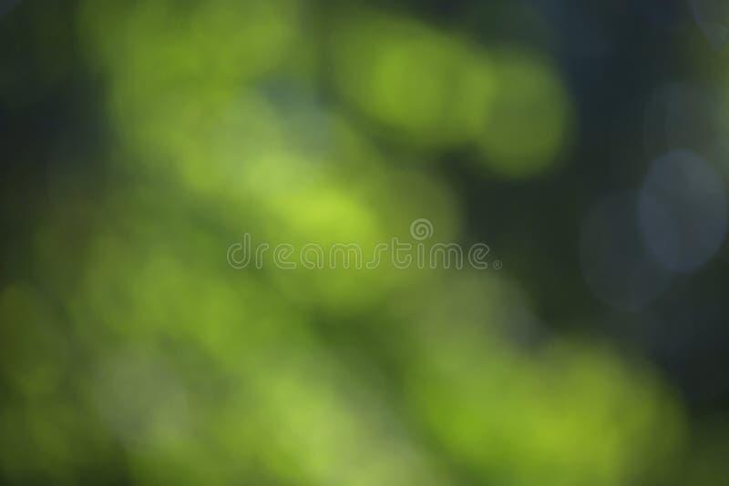 O efeito borrado do bokeh em um fundo da árvore verde sae fotos de stock royalty free