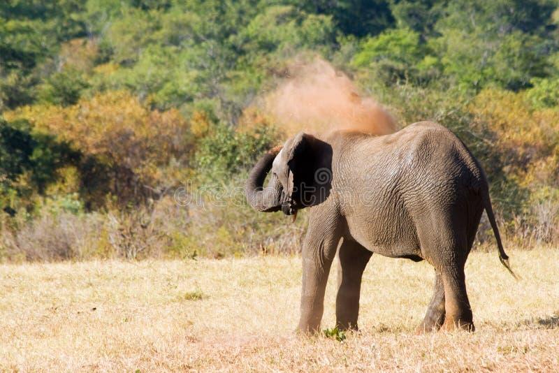 O elefante é banho da areia foto de stock