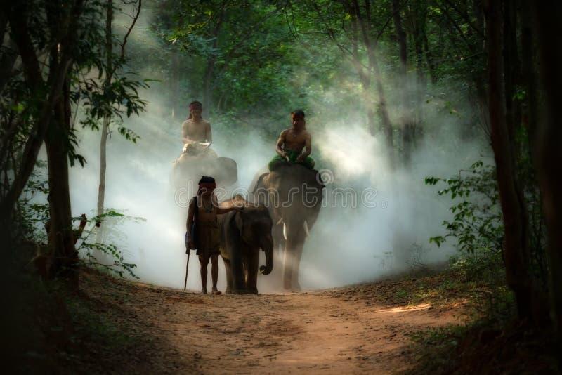 O elefante e o mahout TAILANDESES da família equipam o passeio ao rio em selvagem fotografia de stock royalty free
