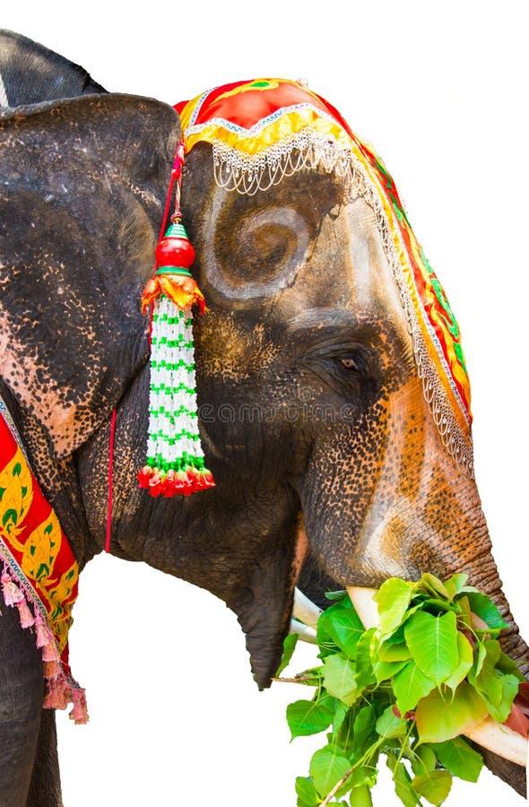 O elefante tailandês está comendo alguma folha fotografia de stock
